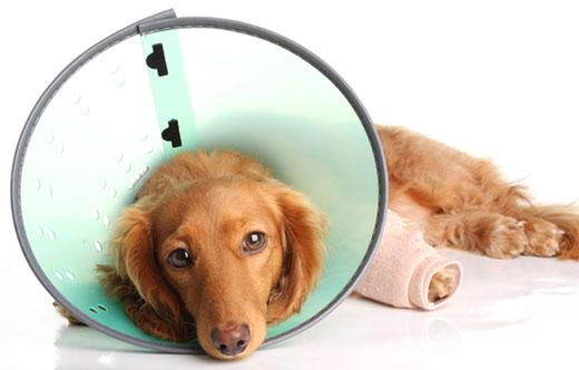 Can Your Dog Stop Having Cushing S Disease