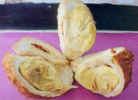 Durian Gondol [3]