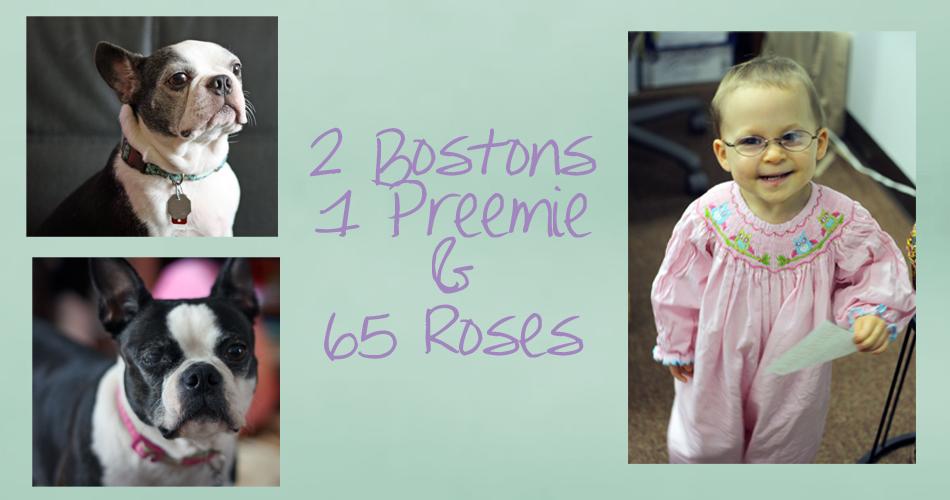 2 Bostons, 1 Preemie, & 65 Roses
