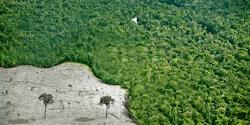 Assine a petição pelo Código Florestal Brasileiro