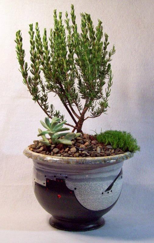 Handmade Ceramic Bonsai Pots By Matthew Kennedy