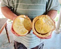O Cupuaçu e o dulçor do evangelho em Marabá - PA