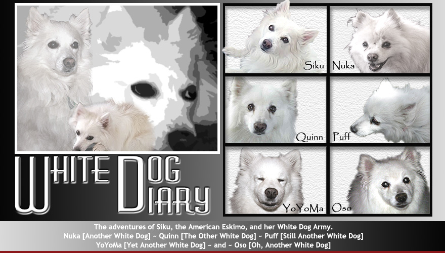 White Dog Diary Online