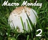 http://macromonday2.blogspot.co.uk/
