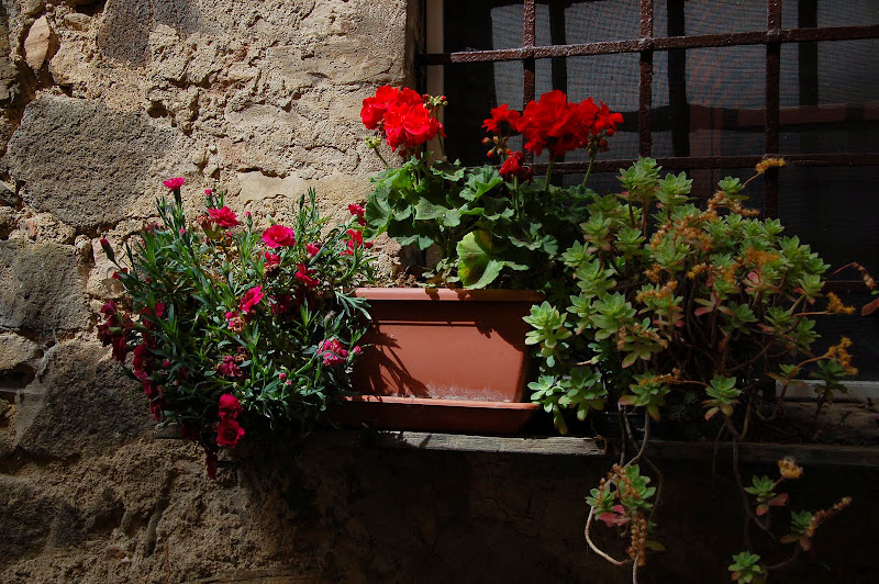 First signs of gardening season in Montalcino