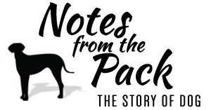 The story of dog - Notes from the Pack