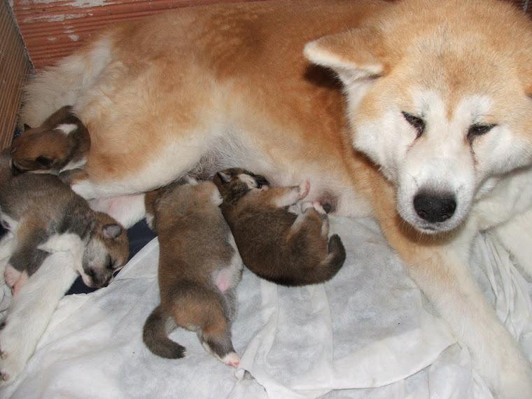 Bébés de Yumi 12 ème jour