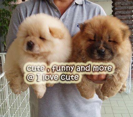 I love cute