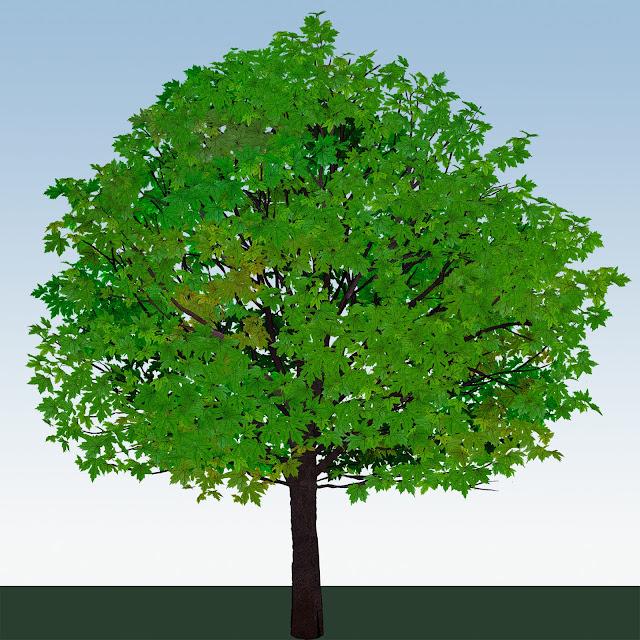 árbol , primavera
