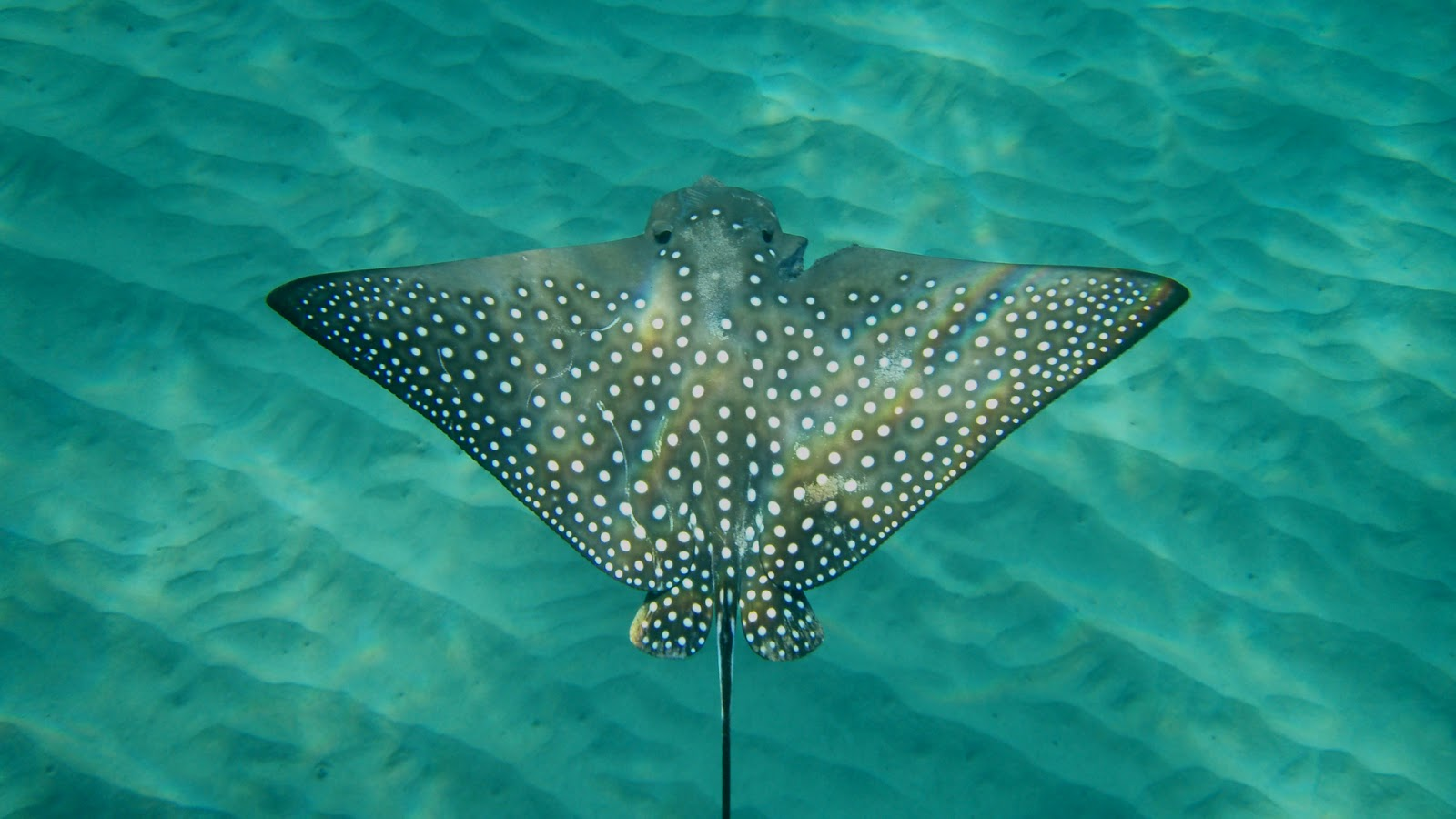 I never knew april 2013 for Is a stingray a fish