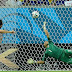 El quinto partido... de Costa Rica