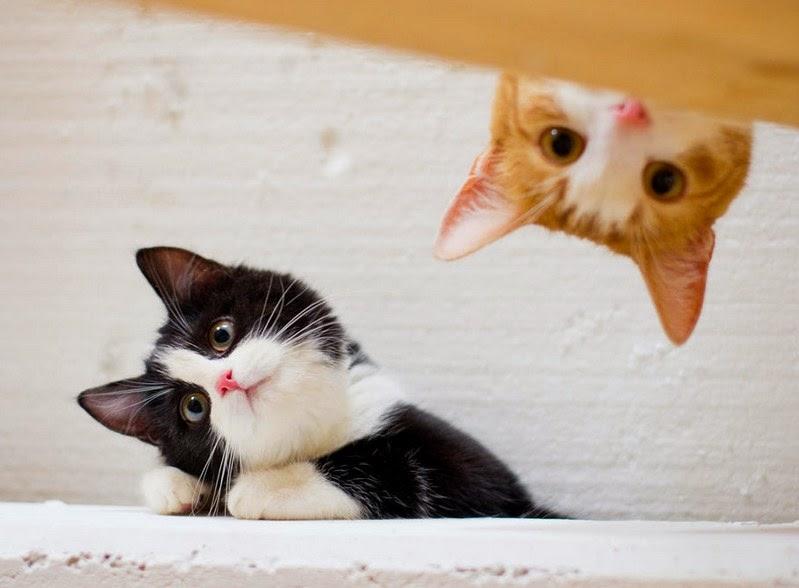 Gambar Kucing Lucu Menggemaskan