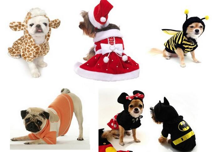 pet  Dicas de Como Vestir Seu Cão