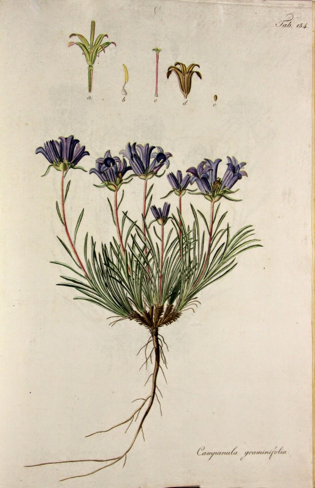"""""""Descriptiones et icones plantarum rariorum Hungariae"""""""