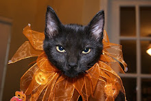 Fancy Feline