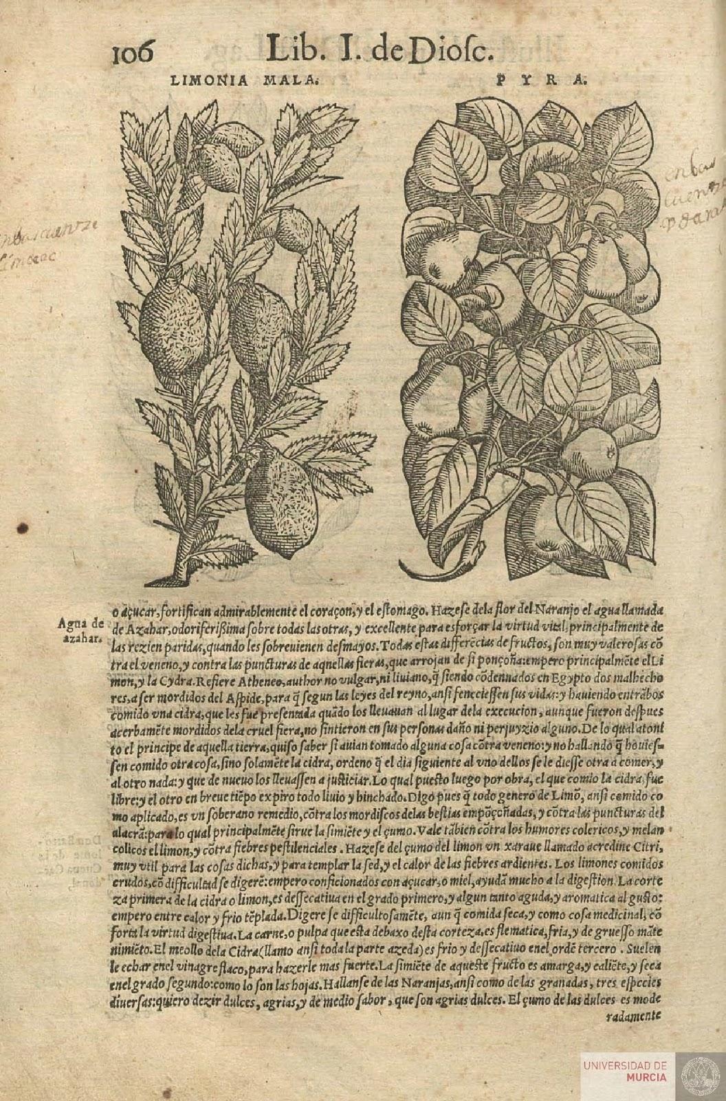 Libro primero de Pedacio Dioscorides Anazarbeo