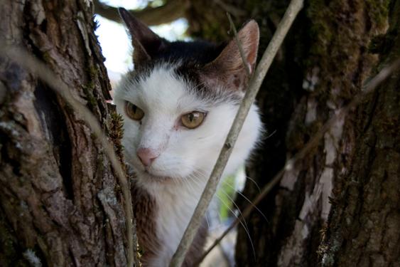 Eksynyt kissa