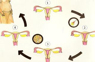 Materi Penyuluhan Kesehatan Reproduksi pada Remaja