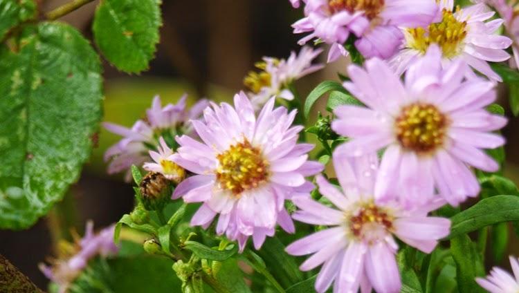 Skab en have som blomstrer til frosten kommer
