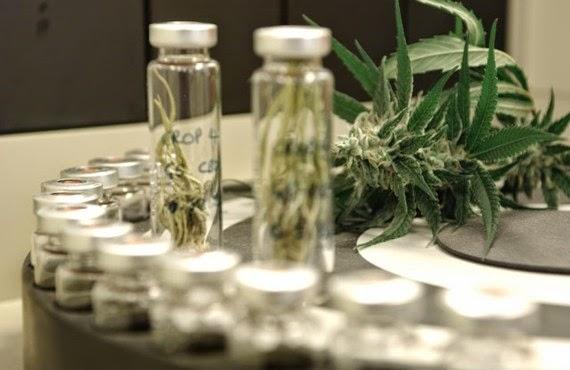 Anvisa libera o uso terapêutico do canabidiol; OUÇA O AUDIO CBN