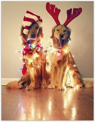 Cutest Dog Christmas Photos, reindeer dogs