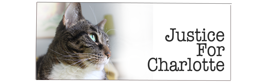 Justice For Charlotte: Cancer Misdiagnosis and UNNECESSARY Amputation at BluePearl Veterinary