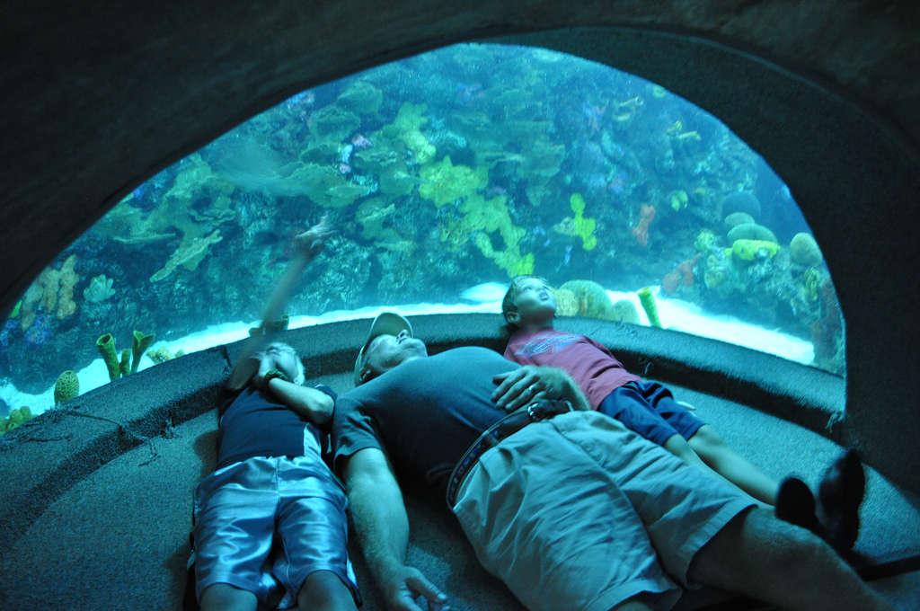 Chattanooga Aquarium Address