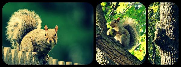 See It! Snap It! Love It! – Animals