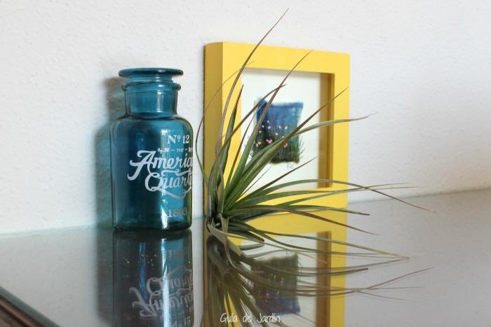 Ideas para decorar con tillandsias guia de jardin - Guia para decorar ...