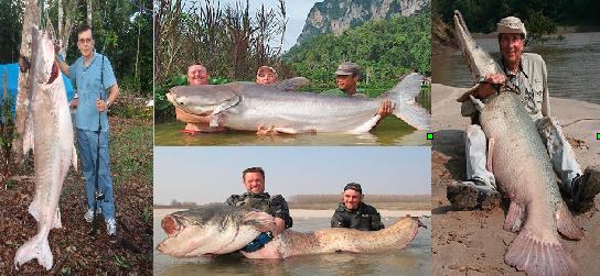 Mondo pesca news gennaio 2013 for Pesci acqua dolce commestibili