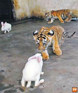 gambar harimau lucu