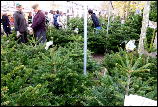 Christmas trees sapins flower market marché aux fleurs Versailles