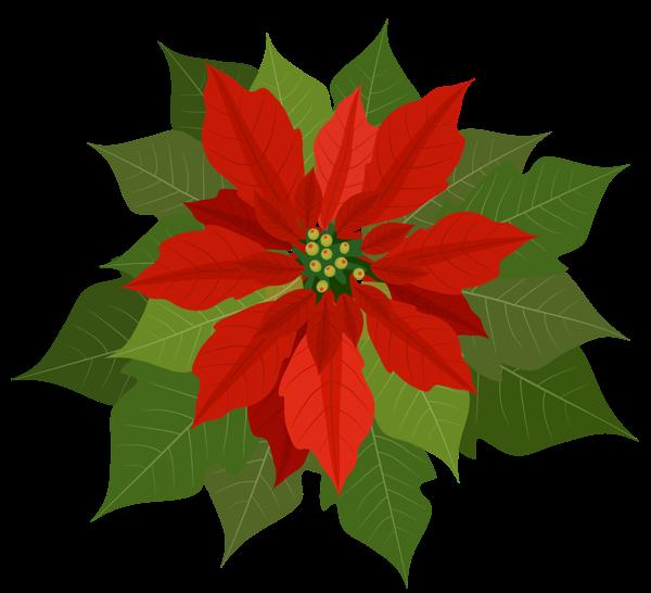 Gifs y fondos paz enla tormenta im genes de flores de - Imagenes flores de navidad ...