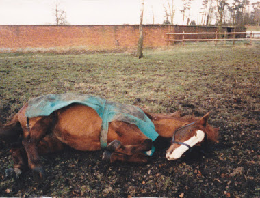 My old horse. Suzy. xx