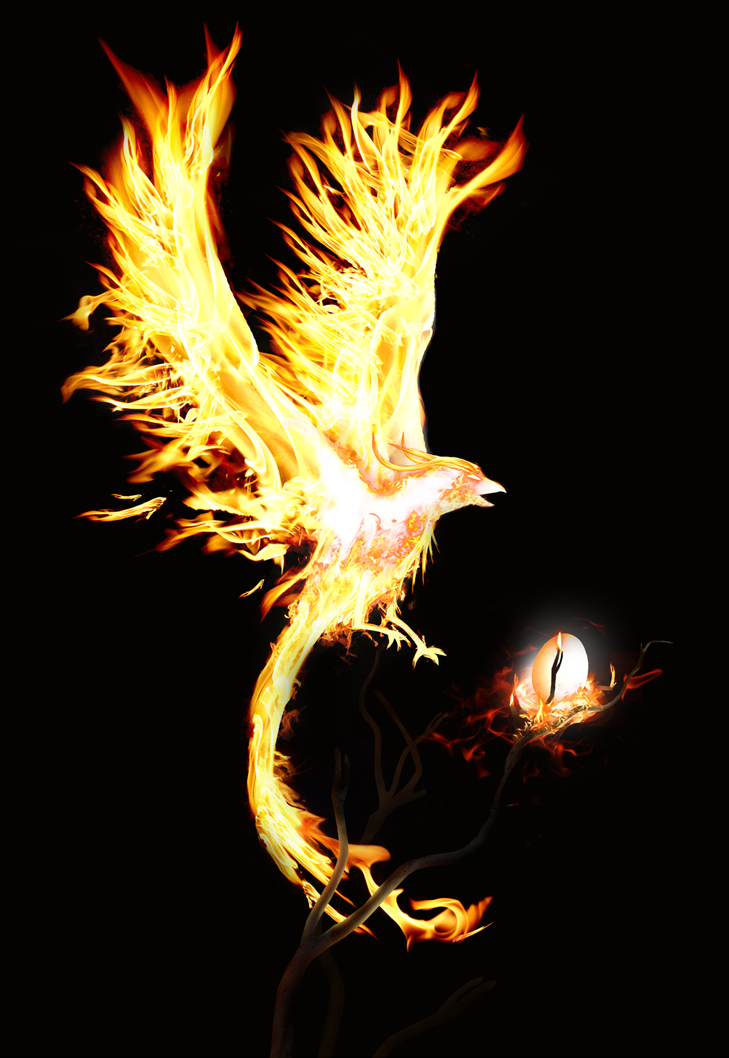 phoenix in hd images and wallpapers coolest phonix