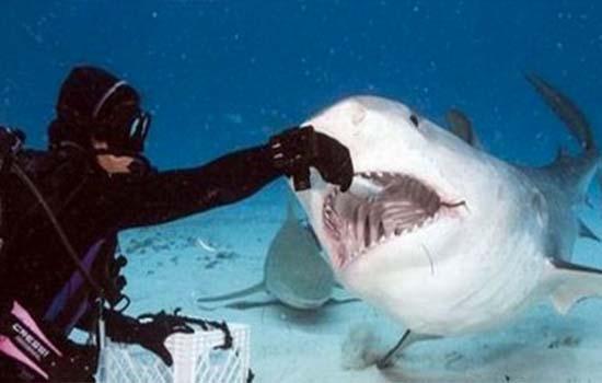 Beginilah Keadaan Sebenar Mulut Ikan Jerung