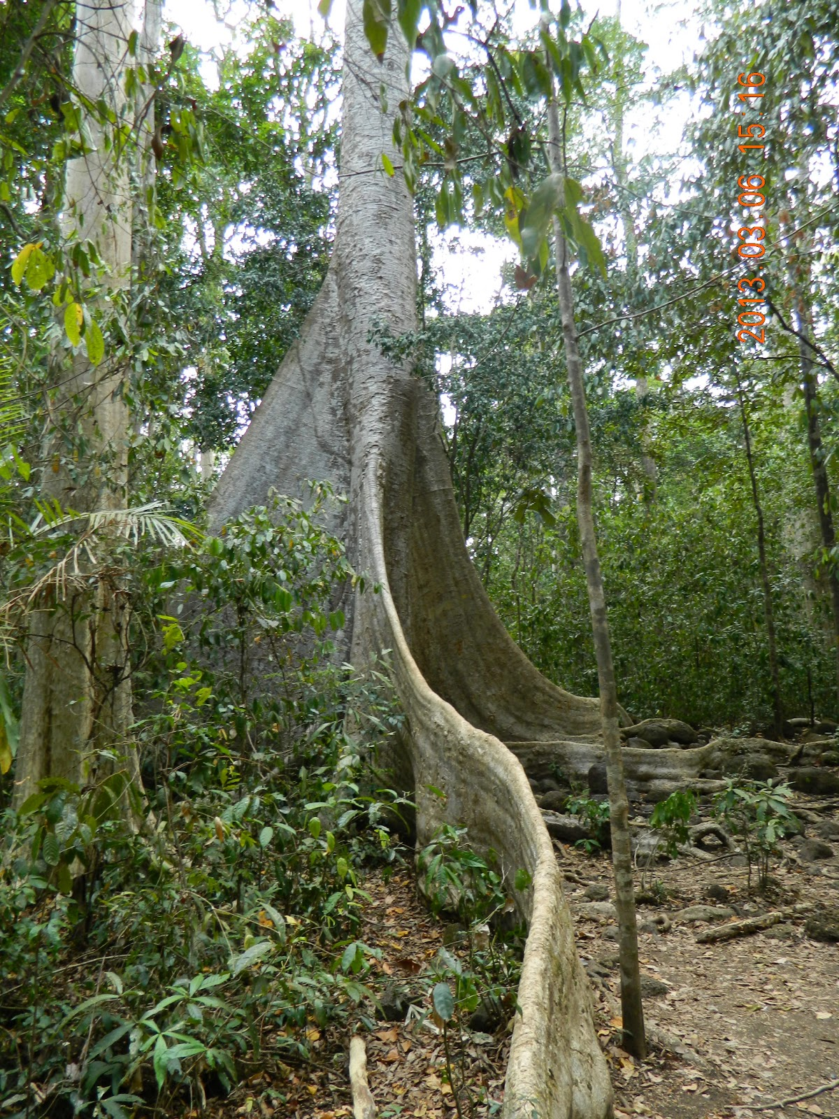 Ðại kinh Thí dụ Lõi cây