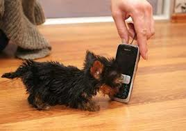 "Who could be ""The World's Smallest Dog?"""