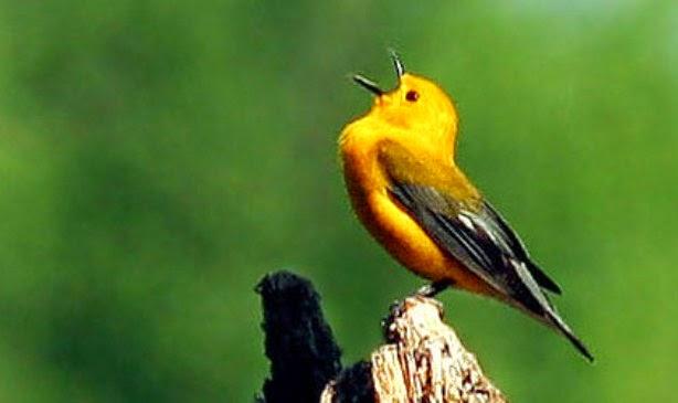 menjaga-kesehatan-burung