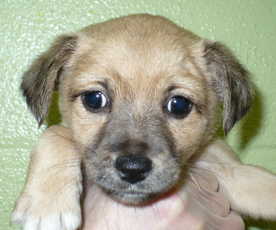 Dachshund Terrier Mix Old dachshund/terrier mix.