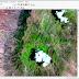 ¿Cuales son las diferencias entre las imágenes LANDSAT 7 / LANDSAT 8?