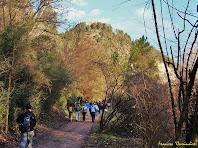 """Per dins el Bosc dels Aurons. Autor: Francesc """"Caminaire"""""""