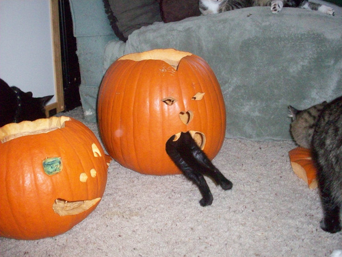 Pumpkin ate my cat!