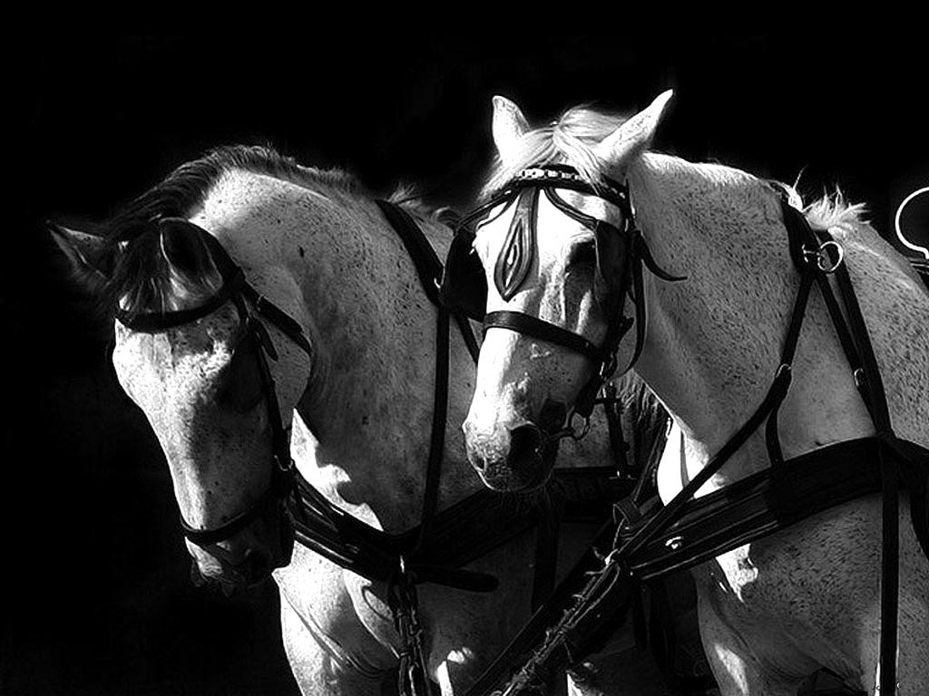 http://4.bp.blogspot.com/-aKFZ6ZO6DCY/Tc_MZipGxwI/AAAAAAAAAcc/GD7SUkC6opg/s1600/chevaux393648kr3.jpg