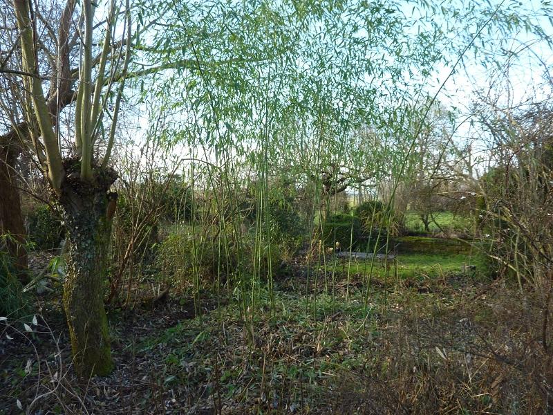Le jardin de brigitte alsace le bambou - Jardin de bambou cannes ...
