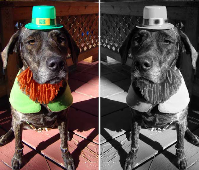 dog_costume dog_leprechaun dog_abe_lincoln