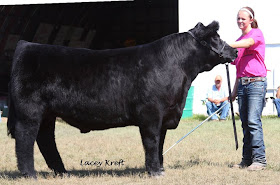North Dakota State Fair (New Salem) Sired by Eye Candy