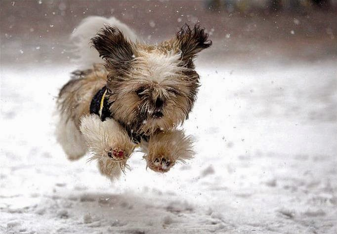 Can You Bathe A Dog In Winter