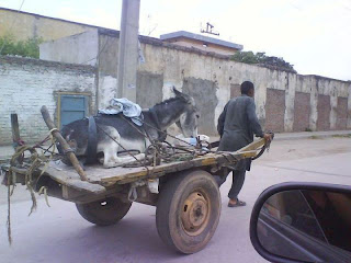 funny picture man pulling a donkey on cart