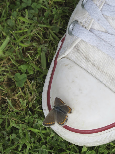 butterfly on my shoe